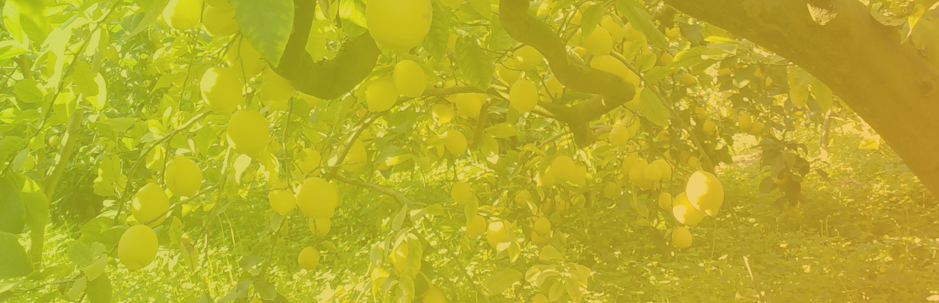 slider_limones